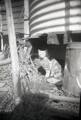 walkers farm cat 1970