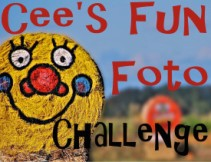 cees fun photo challenge