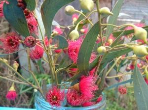 gum red blossom