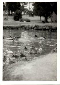 g-ducks