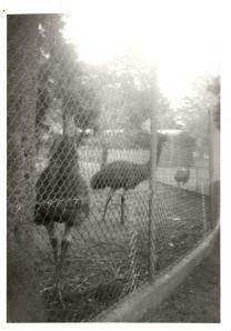 g-emus