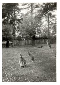 g-kangaroos