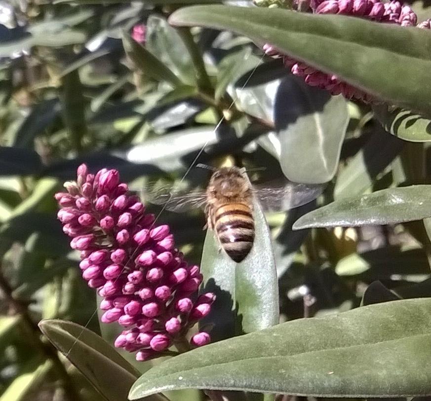 beehebeflying