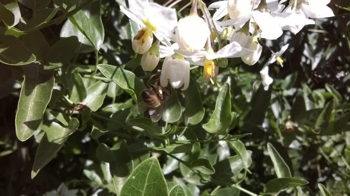 WP_20150305_002 bee