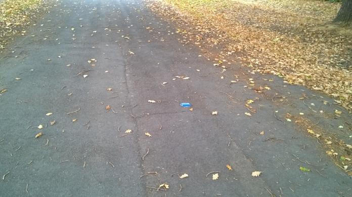 golden leaves line the road under the oak