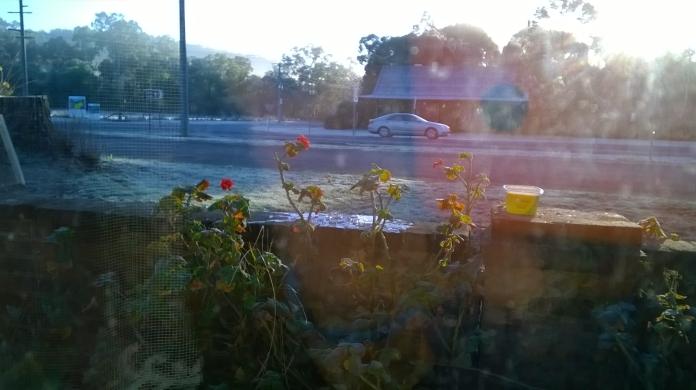 frosty morn 21june15c