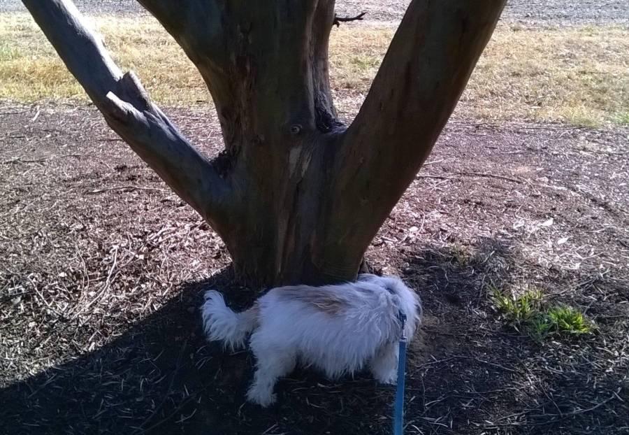 my dog Vika sniffing