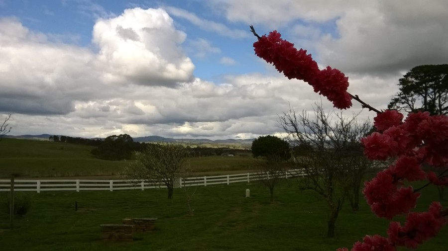 flowering fruit tree in foreground, with sunlight catching the hills in the distance