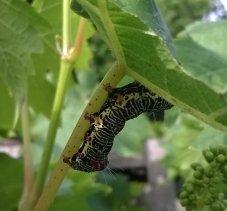 caterpillpart