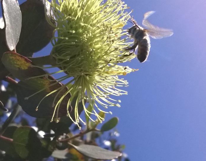 2015 12 dec 520 beewings