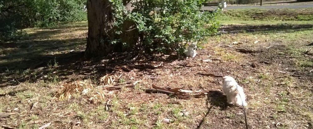 dog meets cat