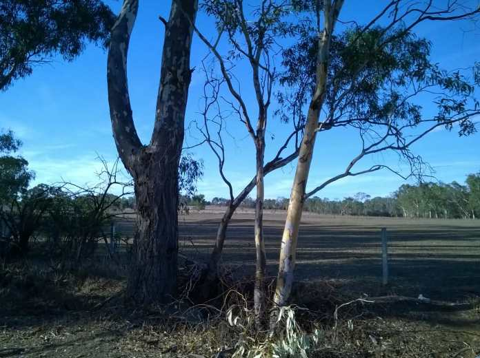 looking South, trees, paddocks