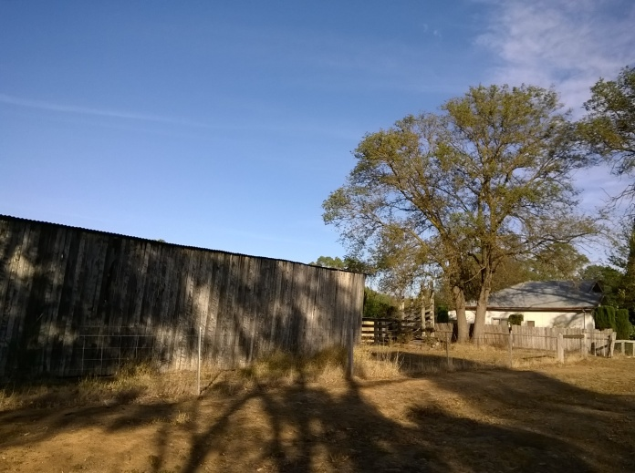 looking West, the back of a hayshed, house, elm, stockyards