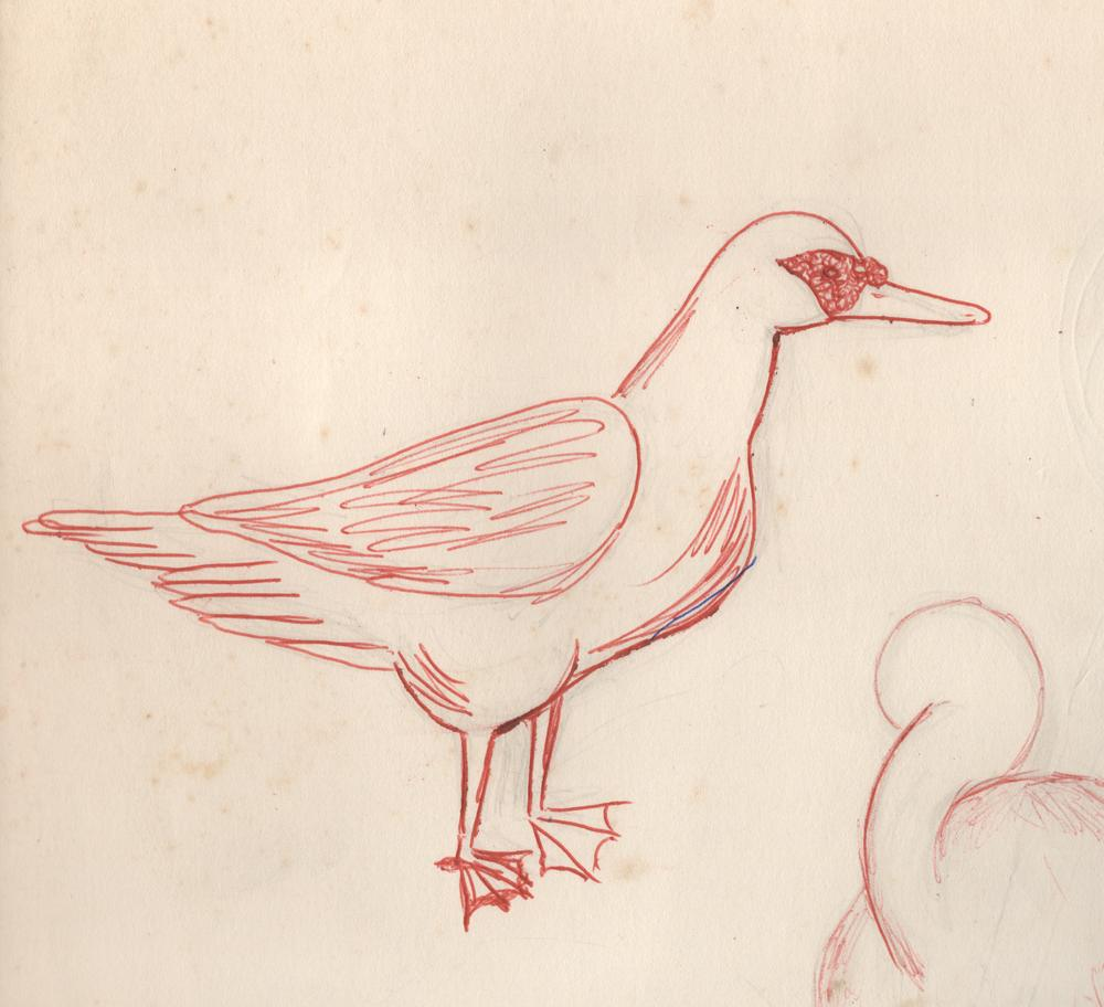 sketch of duck