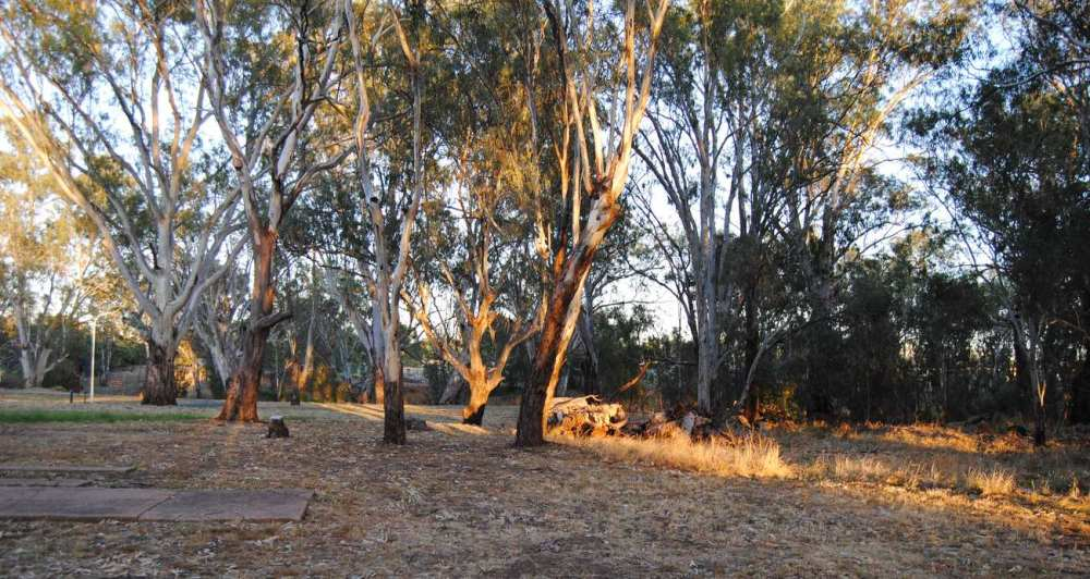 sunlight on trees behind our tent, looking towards the bend in the river