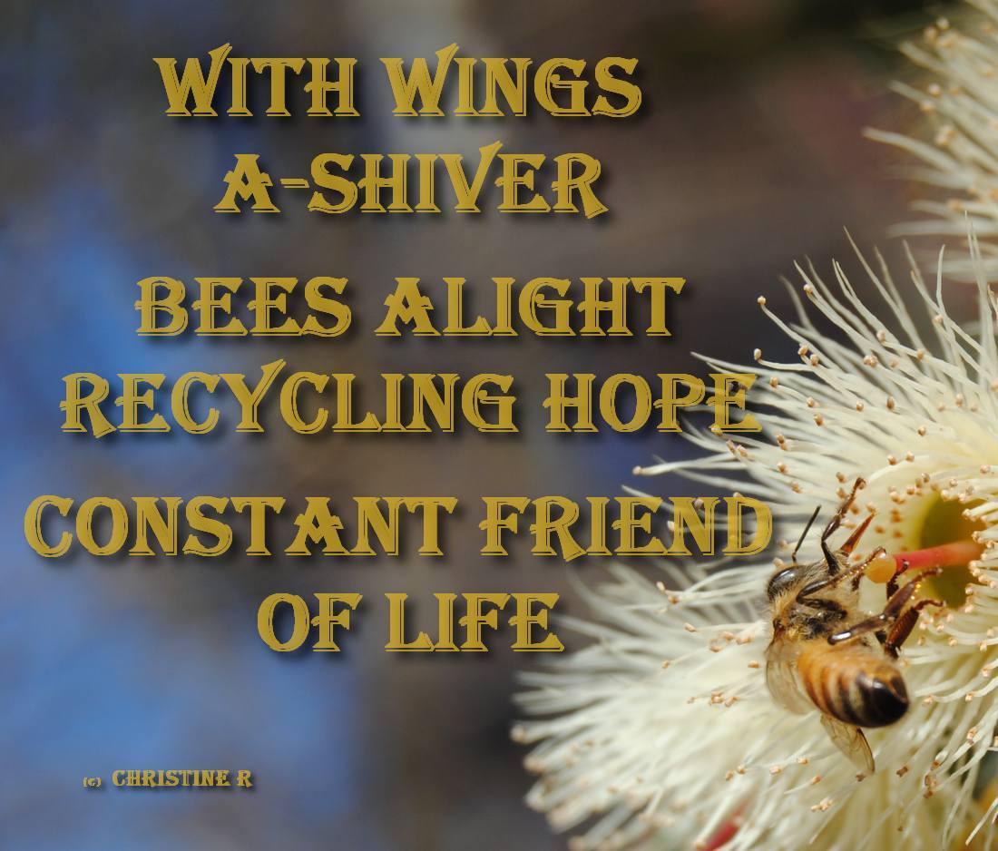 haiku using challenge words: friend & shiver