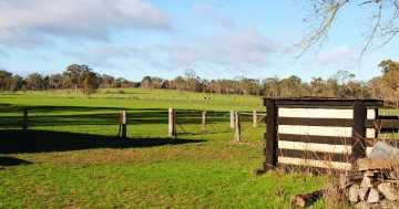 cows and kangaroos scenery