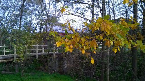 footbridge & autumn leaves