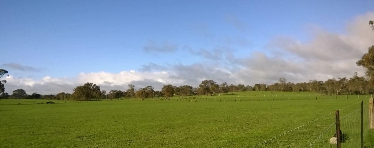 green rural scenery behind my house