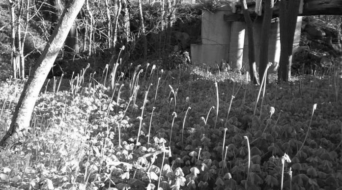 light play on clover flower stalks