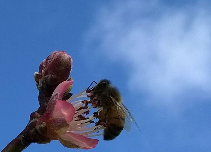exspringbees 165