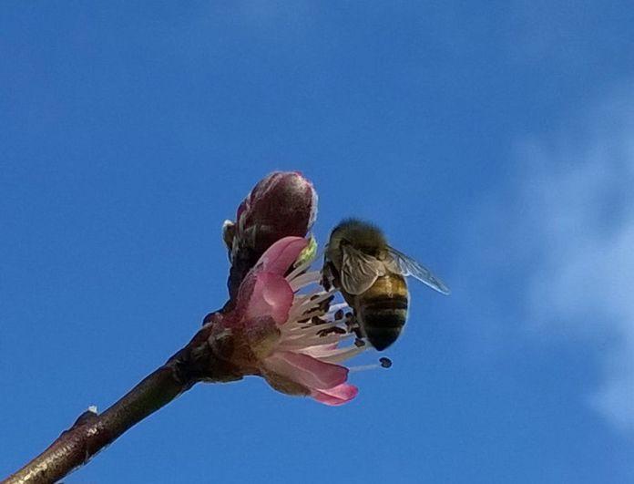 exspringbees 170