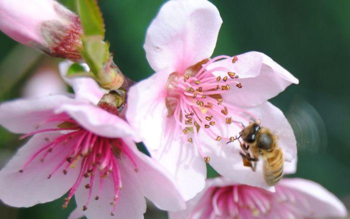 honeybee6