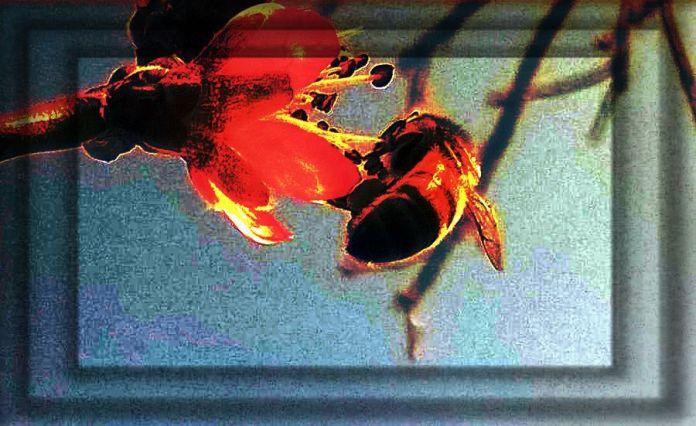 Mequalizedexspringbees 190