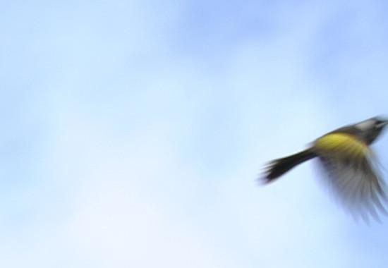nearlybird