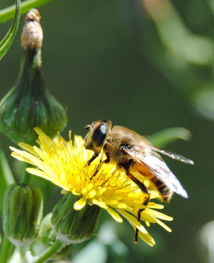 thistleflower1