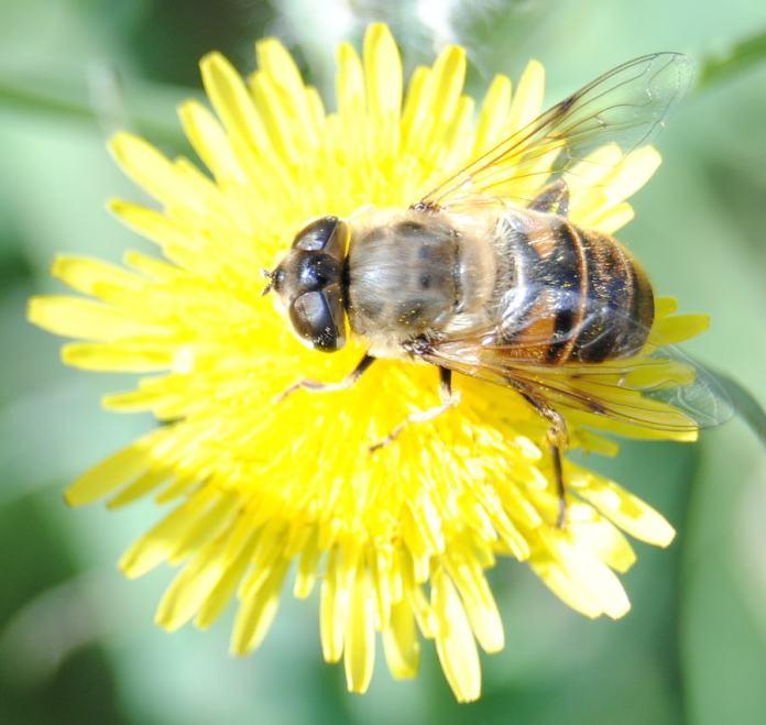thistleflower3