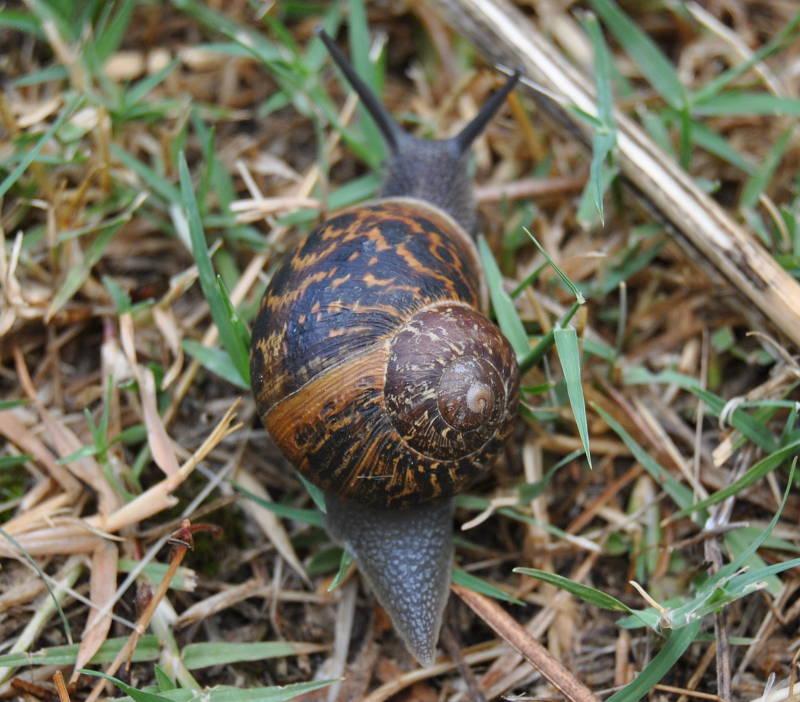 snailfull