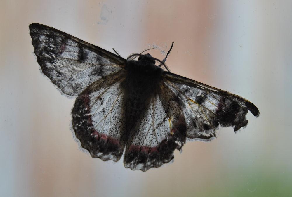 mothDSC_3702