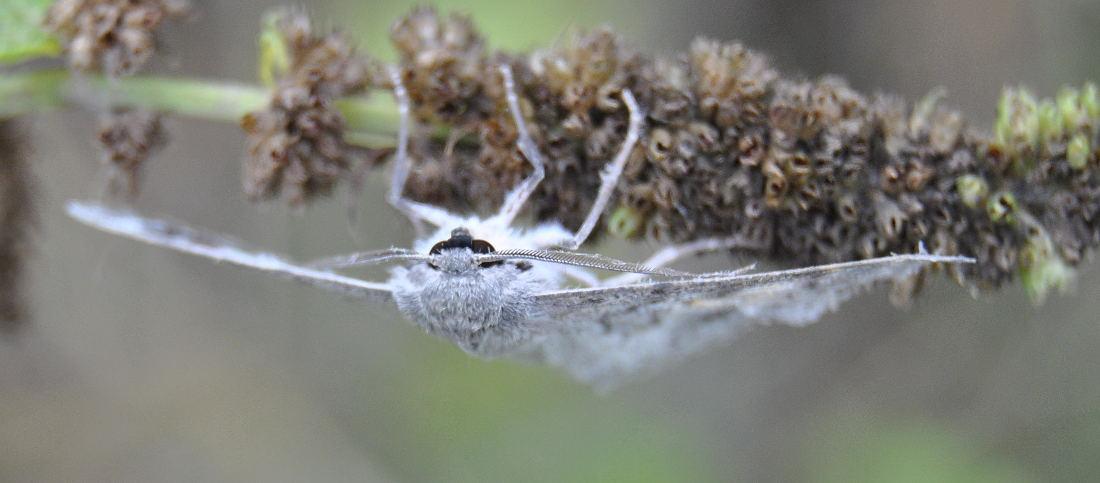 mothDSC_3718