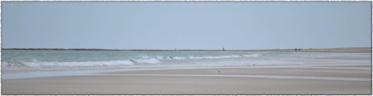 waves_walkers