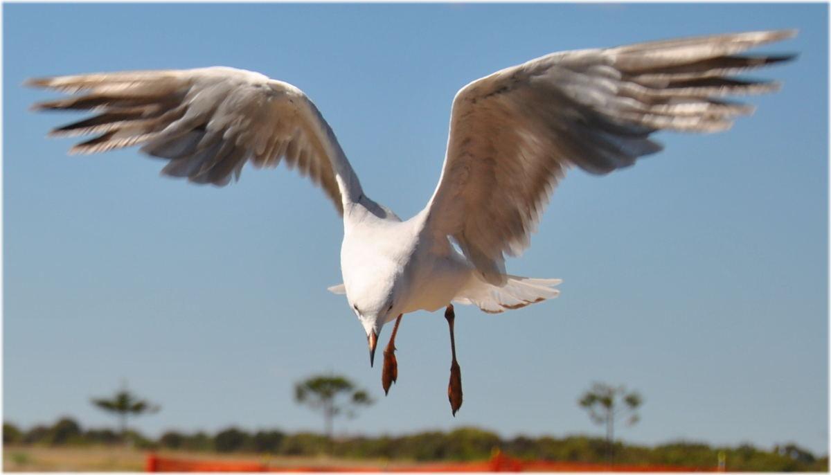 seagull_kingstonSE3