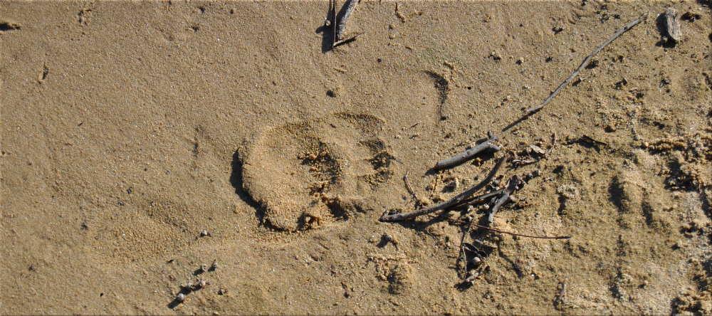 sandyfootprint
