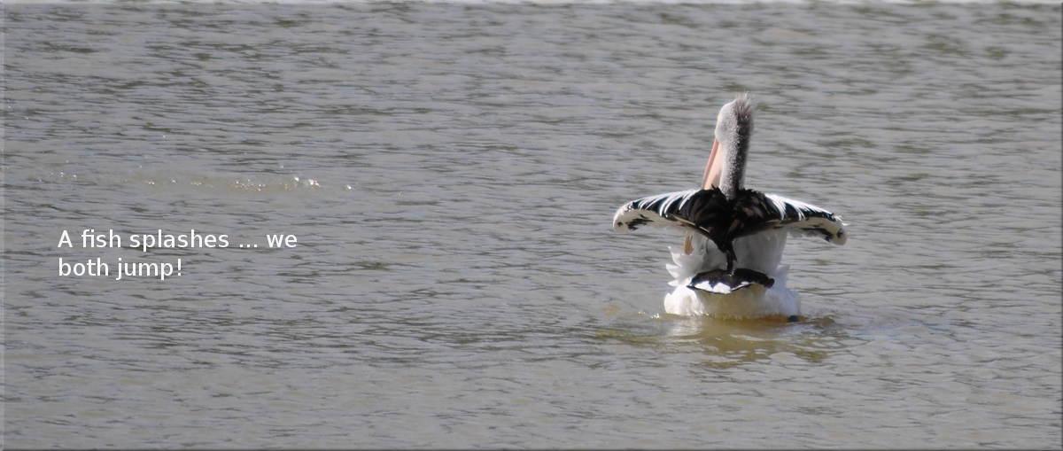 pelicanfright5