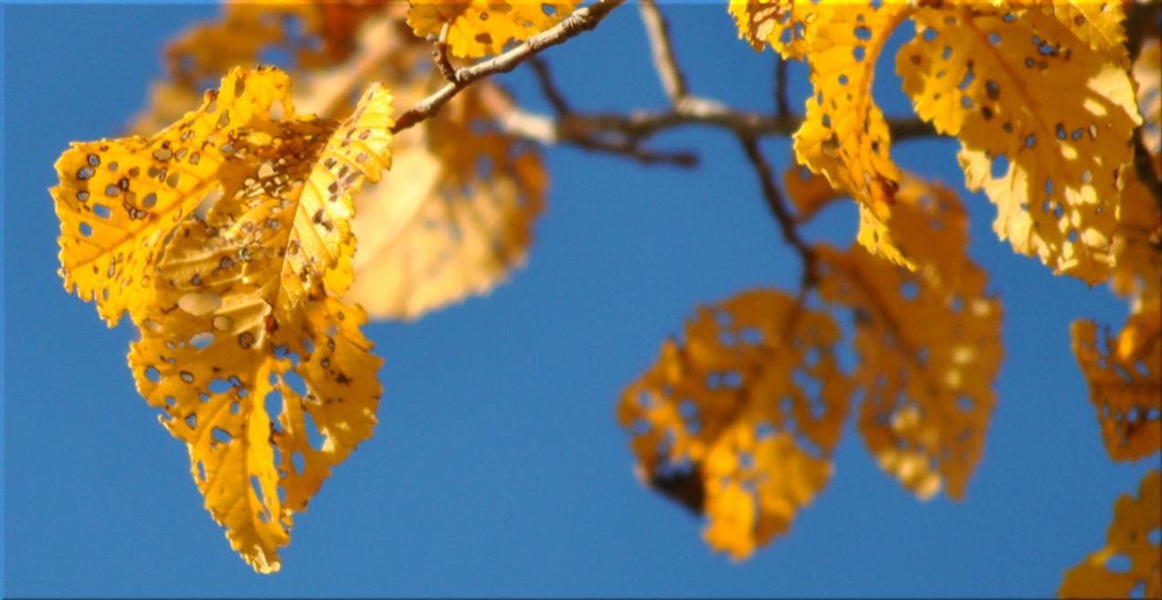 autumn_elm
