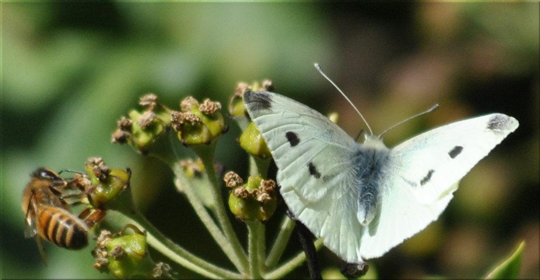 bee_butterfly
